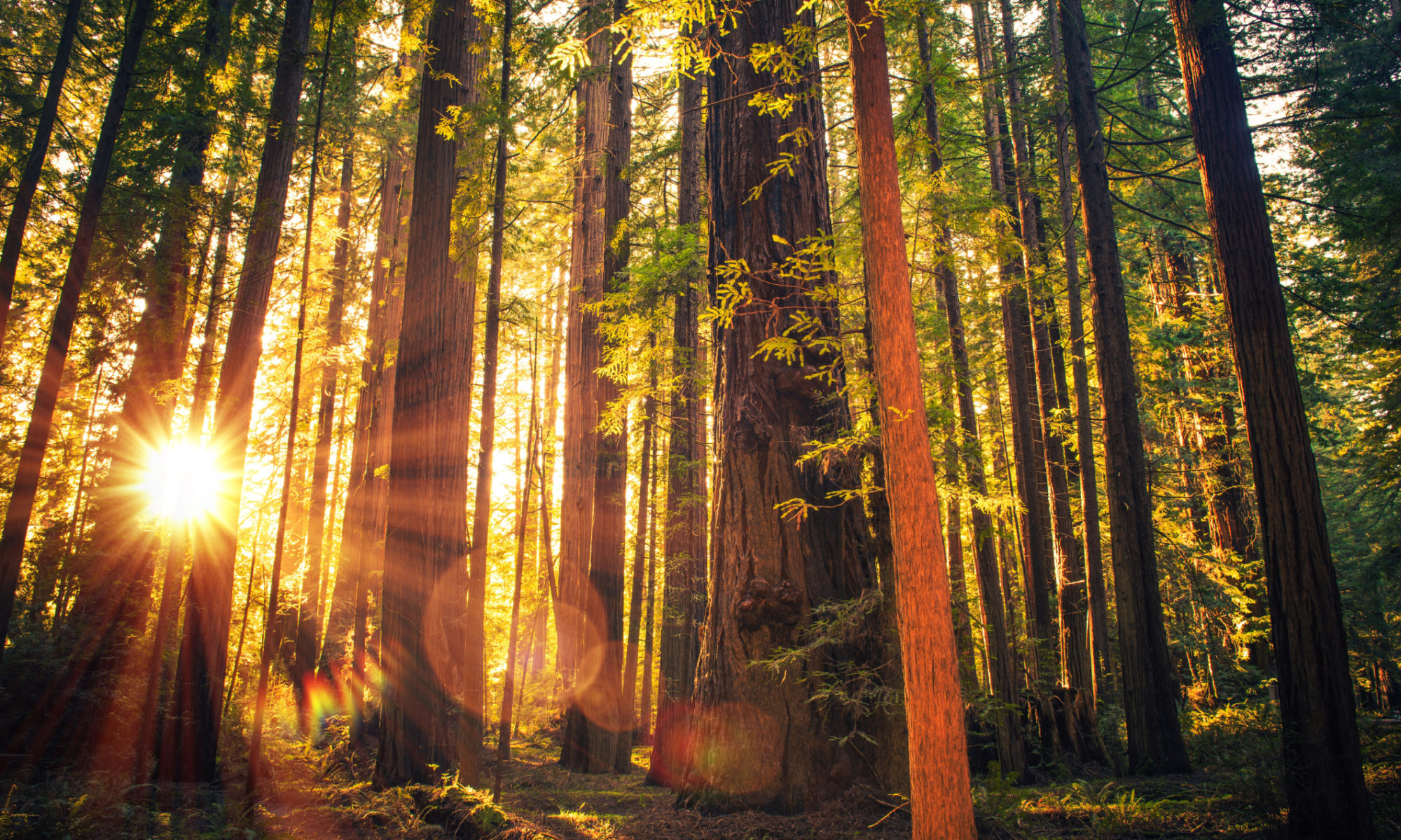 Redwoods Campaign